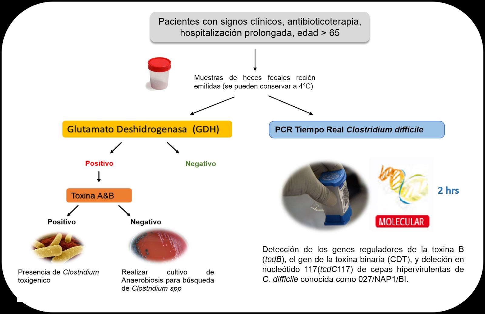 Clostridium difficilae toxina A/B in materii fecale | etigararunway.ro