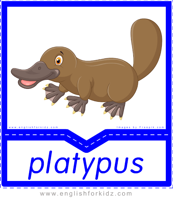 Platypus - printable Australian animals flashcards for English learners