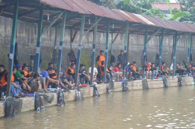 http://aquaticessen.blogspot.com/2017/01/umpan-ikan-mas-segala-cuaca-terbaru-2017.html