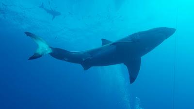 """Cena de """"O Mistério do Grande Tubarão Branco"""" - Divulgação"""