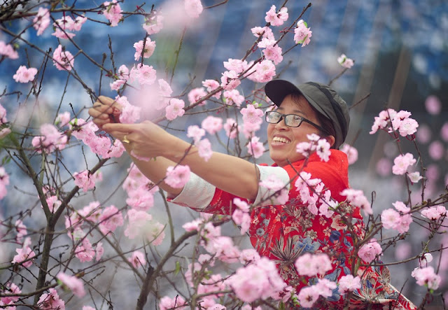 Flower festivals open in Ha Long and Son La 1
