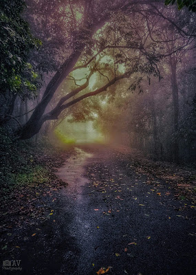Road into the woods