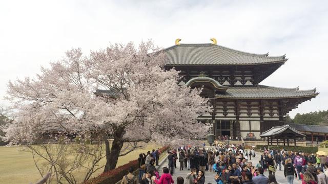7 rzeczy, które spodobały mi się w Japonii
