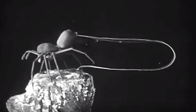 araña voladora