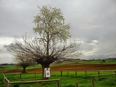 Pohon yang Tumbuh Diatas Pohon Pohon yang Tumbuh Diatas Pohon 35687 1286447652278 921088 n