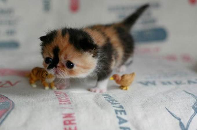 anak kucing belajar berjalan