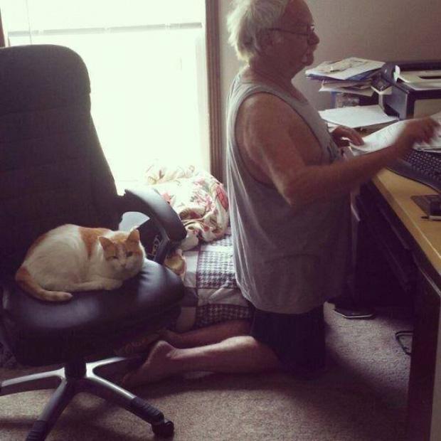 14 lý do vì sao đừng nên về chung nhà với một con mèo