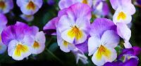 bloom blossom close up