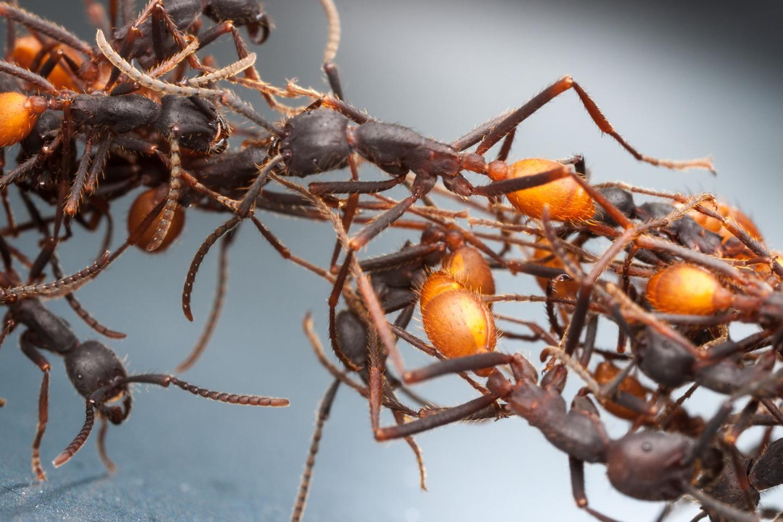 Risultati immagini per The Land of Ants
