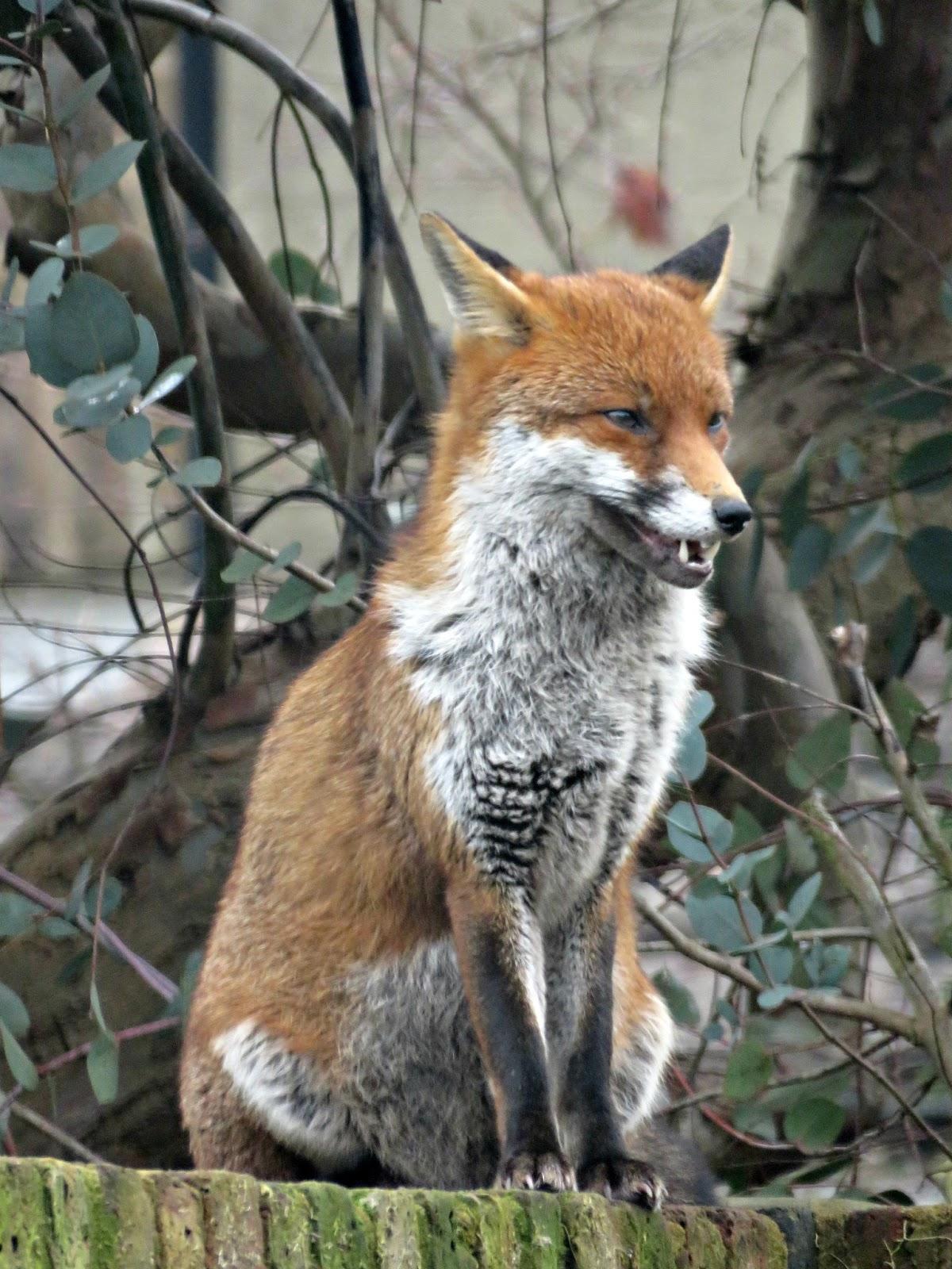 Just Saying Fantastic Mr Fox