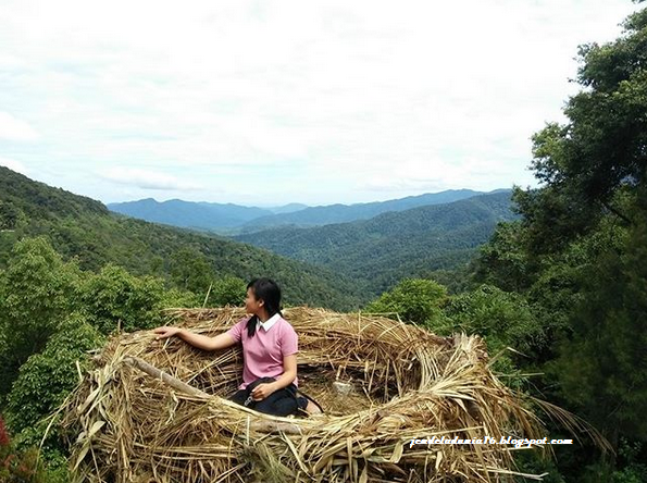 Wisata Unik Spot Foto Rumah Pohon Sangkar Burung Sidikalang