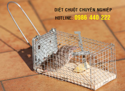 Diệt chuột tại Quảng Ninh