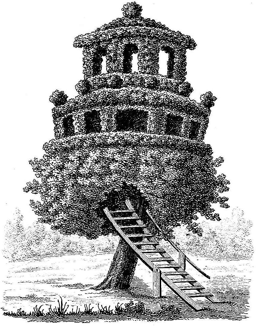 an 1839 topiary treehouse illustration