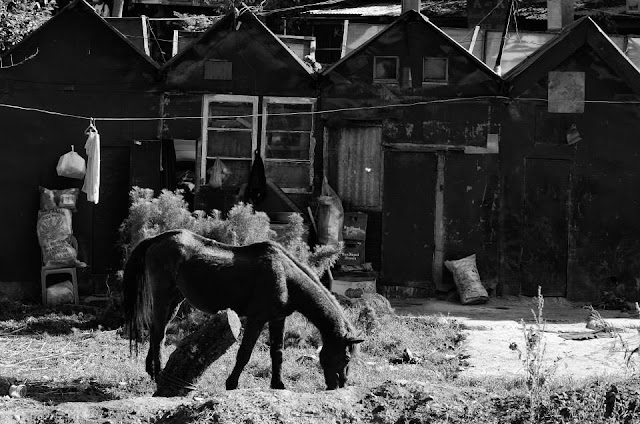 Equine feeding Wright Park Baguio City