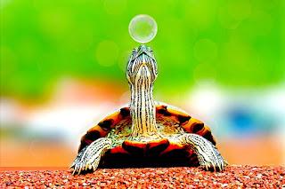 Pengertian Hewan Reptil dan Contohnya