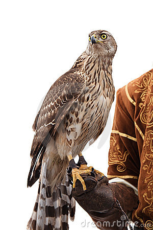 falcon-hunter-isolated-white-17218999.jp
