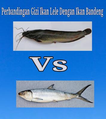 ikan lele dan ikan bandeng gizi
