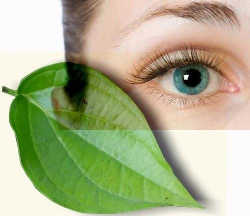 Terapi Dan Manfaat Daun Sirih Untuk Obat Sakit Mata Merah