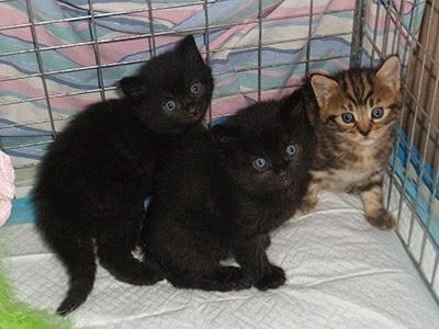 Teenage fosterer Tristan's kittens