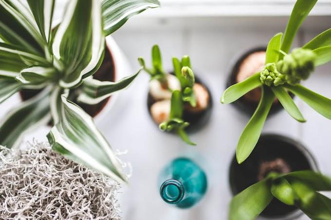 Φυτά που προσελκύουν θετική ενέργεια
