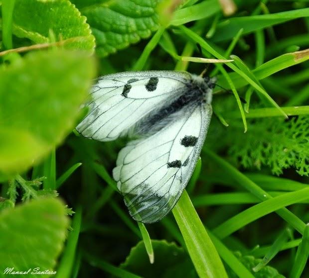 Scendendo da Serra Sparvera. Farfalla