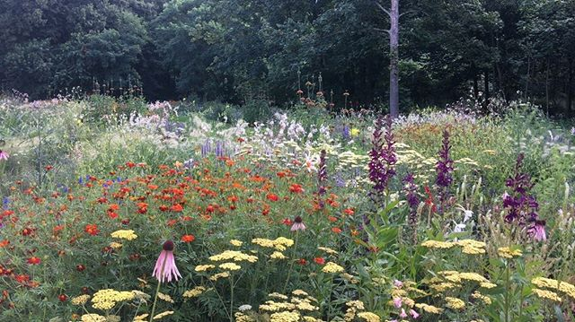 Jardín vivaces en Museo Voorlinden diseñado por Piet Oudolf