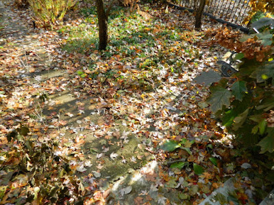 Toronto Cabbagetown Fall Front Yard Garden Clean up by Paul Jung Gardening Services before
