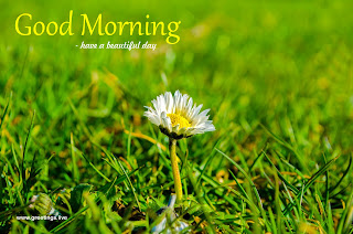 fresh morning grass white flower free greetings card