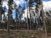 Uusi köysiseikkailupuisto avattiin Helsingin Paloheinään 2