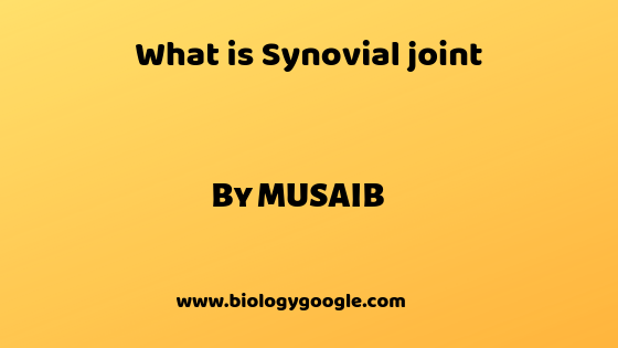 What is Synovial joint