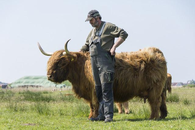 Langeoog, Highlandrinder, Rumbi, Heiko Arends, Ostfriesland, Bio, Nachhaltigkeit, Seekrug