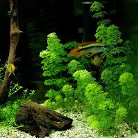 azotany w akwarium