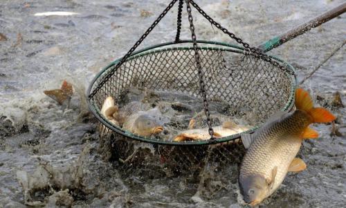 La pesca eléctrica será ilegal en la UE a partir del 2021