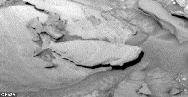 Shark on Mars_2