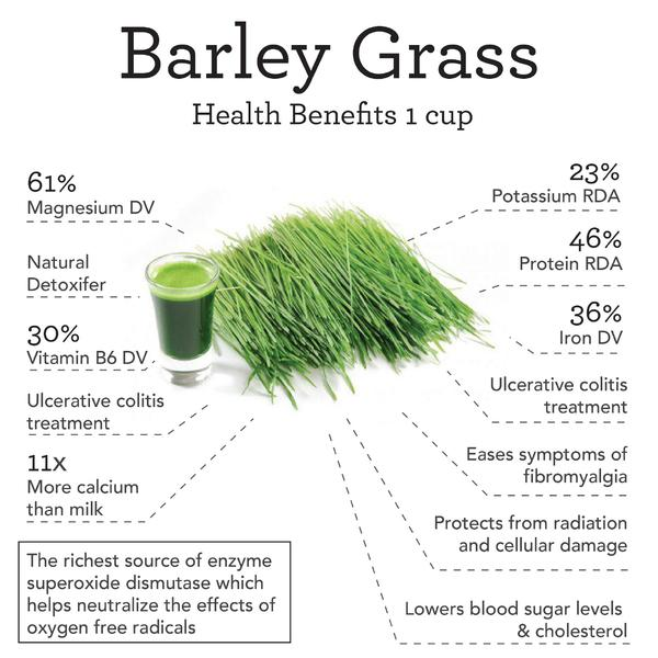 Barley grass powder benefits skin