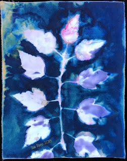 Wet cyanotype_Sue Reno_Image 497