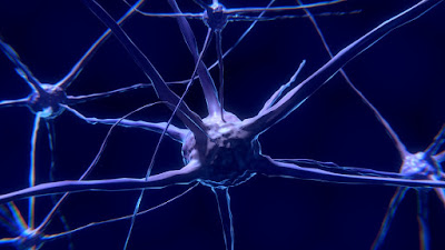 Scientists discovered a special neuron that is unique to humans. This is another difference between humans and animals.
