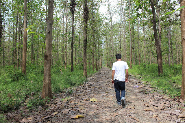 Hutan Jati Tegal