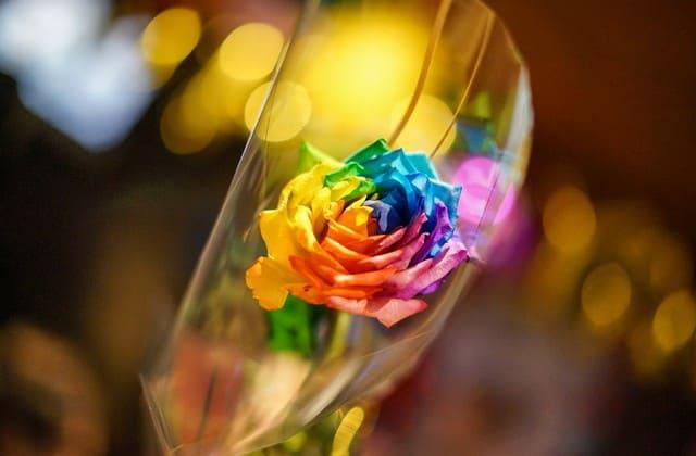 Uniknya, bunga mawar juga dikaitkan dengan karakter introvert