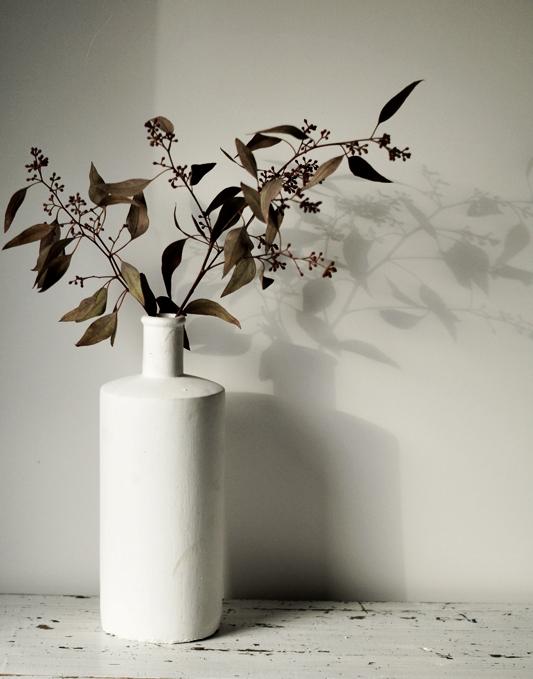 Blog + Fotografie by it's me! - Eukalyptus mit Schattenbild