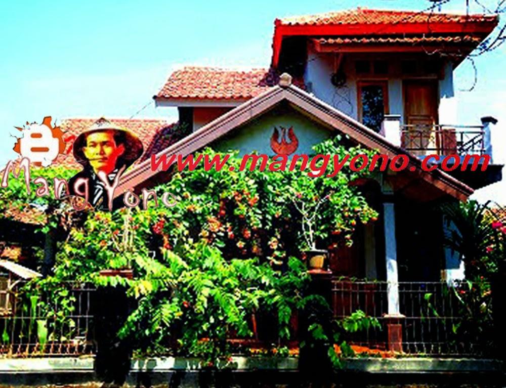 Bunga Melati Merah, Melati Belanda , Melati India, Jasmine sambac ditanam di depan rumah saya