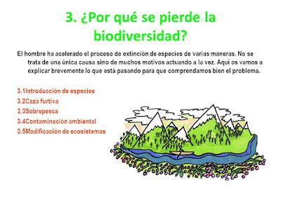 ¿Por qué se pierde la Biodiversidad?