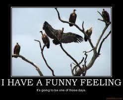 [Image: vulture_3.jpg]
