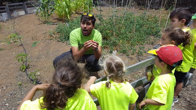 agricultura para niños arucas