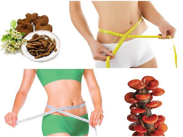 giảm béo bằng nấm linh chi