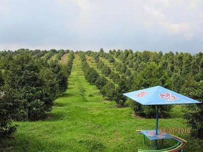 Kebun Buah Agro Wisata Ngebruk Patean di Kendal Jawa Tengah