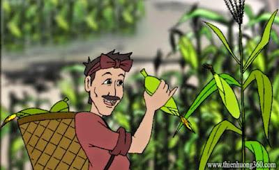 Hãy gieo giống tốt: Câu chuyện người nông dân trồng bắp