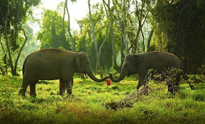 Source: Anantara Hotels, Resorts & Spas. Elephants from the Anantara Golden Triangle Elephant Camp & Resort.