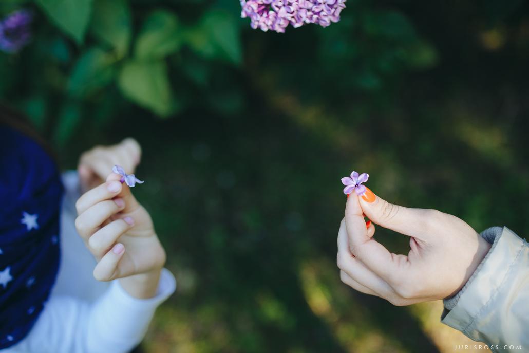 Laimītes meklēšana ceriņu ziedos