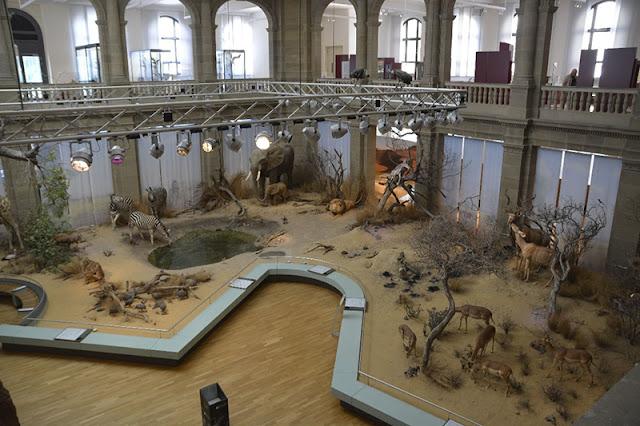 Museu Koenig em Bonn